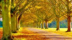beautiful scenery | beautiful-scenery-wallpaper_1920x1080_2013-top-10-scenery-images-4.jpg