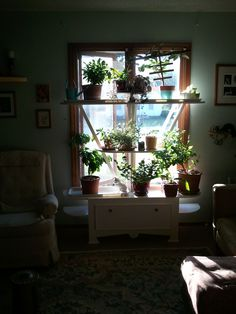 """A houseplant display stand with storage, and a distinct garden trellis, art deco motive. I call this style""""Cottage Deco"""" I built it out of pine boards in my shop. Looks lovely in our parlour. Got it done literally 3 days from the first fall frost. Plants got in on time!"""