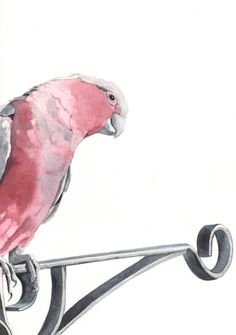 Galah painting   bird print of watercolor painting by Splodgepodge, $20.00
