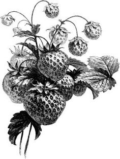 How the strawberry came to the Cherokee people - a tale.