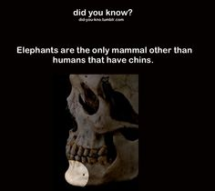Elephants have chins Funny Fun Facts, Weird Facts, Random Facts, Fun Facts About Animals, Animal Facts, The More You Know, Did You Know, Scary Mary, All About Elephants