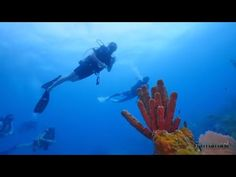 Belize Barrier Reef diving - dive the world famous Southern Barrier Reef in Belize with Hamanasi - Southern Belize's biggest and best dive operation. Belize Barrier Reef, Belize Vacations, World Famous, Diving, Southern, Scuba Diving