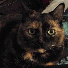 Cat in My lap  #catlovers #cat #cats