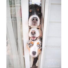From @shandandherdogs: A Few Stooges #cutepetclub [source: http://ift.tt/2nKk61J ]