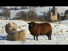 Vivaldi - De Vier Jaargetijden - Winter