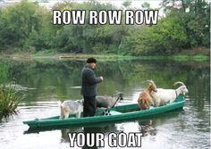 Row Row Row your boat/goat
