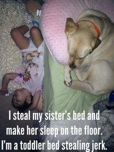 picture  of animal shaming | Toddlers don't need beds | Animal Shaming
