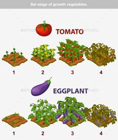 Buy Stage of Growth Vegetables Tomato and Eggplant by BabySofja on GraphicRiver. stage of growth vegetables. Tomato and Eggplant in vector for playing a perspective. Garden Plants Vegetable, Cottage Garden Plants, Fruit Garden, Edible Garden, Garden Deco, Plant Growth, Farm Gardens, Growing Vegetables, Garden Planning
