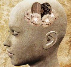 Notre capacité à entendre ce qui n'est pas dit (la transmission émotionnelle). Lorsque l'on échange avec l'autre, au moment-même où on perçoit son état émotionnel, souvent, on calque notre attitude et notre posture sur les siennes.