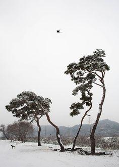Bonsai Forest, Korean Artist, Landscape Photographers, Landscape Photos, Painting Inspiration, Greenery, Tans, Drawings, Nature