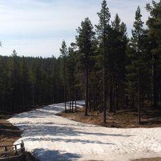 Little bit of snow left on ski tracks in Saariselkä. Photo is taken on 30 May. #saariselka #astueramaahan #stepintothwilderness