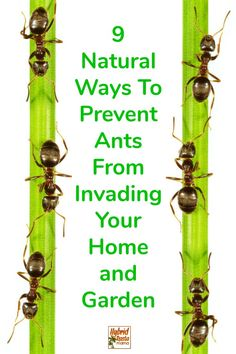 Do you have an ant problem? Do you want to get rid of ants forever? Do you want to prevent ants? Ants In Garden, Garden Pests, Garden Insects, Best Pest Control, Weed Control, Bug Control, Bug Spray Recipe, Ant Problem, Get Rid Of Ants