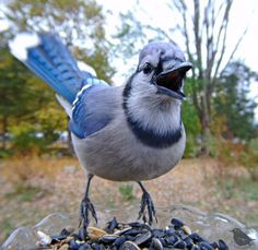 Woman Sets Up A Feeder Cam In Her Yard And The Photos Are Extraordinary (30 New Pics) Funny Expressions, Tiny Bird, Viewing Wildlife, Backyard Birds, Bird Pictures, African Animals, Exotic Birds, Wild Birds, Camera Photography