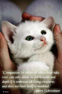Schweitzer on compassion