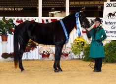 5 year old Rocky Mountain mare - $5500 (Lexington)