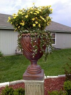 Planter in front yard