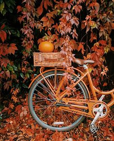 Hottest Free Kupferrot 🍂 Concepts Pumpkins tend to be beautiful round, bright lime, and in autumn they mustn't be lacking especially Fall Inspiration, Autumn Cozy, Autumn Fall, Autumn Coffee, Autumn Feeling, Autumn Witch, Cozy Coffee, Autumn Scenes, Autumn Painting