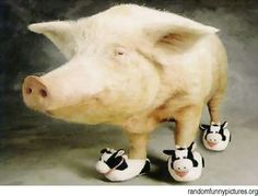 tags, slippers, shoes, funny pics, cow slipper, pigs, shoe pork, moo shoe, dement humor