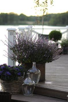 terrace & balcony decoration ideas, lavender