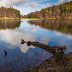 Lago #Calamone (1400 meters above sea level) a beautiful mountain lake surrounded by beech trees - Instagram by @stevemme Beech Tree, Sea Level, Trees, River, Mountains, Instagram Posts, Nature, Outdoor, Beautiful