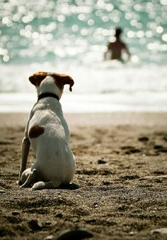 Catch a wave while I sit on the warm beach #beach #dog