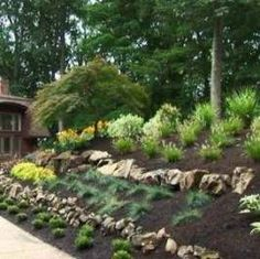 home landscape slope backyard with black mulches and stones : Sloped Backyard Home Landscape. home landscaping ideas,home landscaping pictures,sloped backyard landscape,sloped backyard landscape ideas,sloped backyard landscaping designs Sloped Backyard Landscaping, Landscaping On A Hill, Sloped Yard, Landscaping With Rocks, Landscaping Tips, Backyard Ideas, Mailbox Landscaping, Steep Hillside Landscaping, Inexpensive Landscaping