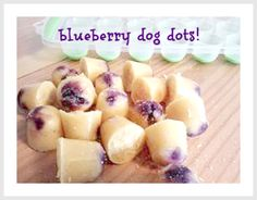 coconut oil blueberry dog treats | Camp Wander
