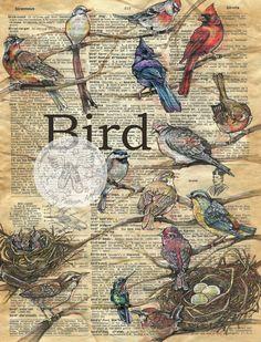 flying shoes art studio: BIRDS