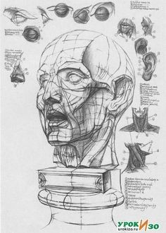 Is It Art? Instant Drawing and the Digital Darkroom – Learn How To Draw Head Anatomy, Human Anatomy Drawing, Anatomy Art, Anatomy Sketches, Drawing Sketches, Art Drawings, Drawing Heads, Painting & Drawing, Drawing Drawing