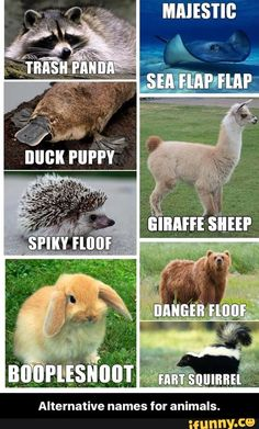 alternative names for animals funny - Google Search