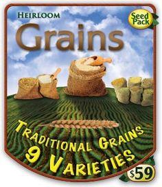 Non-Hybrid Grain Seeds | Open Pollinated Heirloom Seeds - Grains