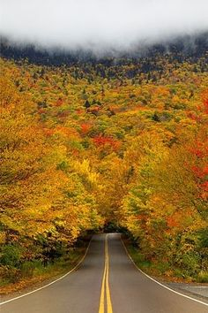 Autumn tree tunnel. Smugglers Notch State Park. Vermont