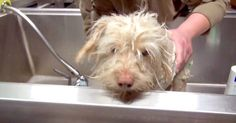 A Dog Living In A Sewer Will NEVER Be On His Own Again! | The Animal Rescue Site Blog