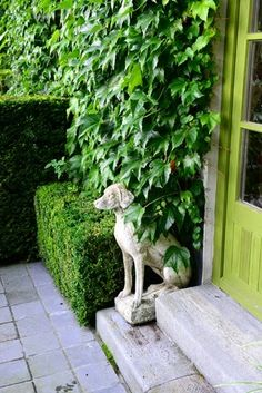 dog statue next to door, ivy, boxwoods, green door