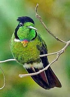 LAS COLECCIONES DE MI VIDA: Aves-Colibris,