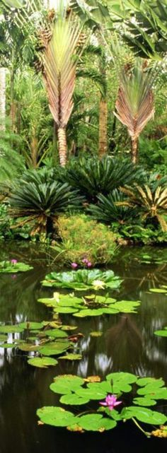 Tropical Rain Forest Jungle Life, Forest Plants, Tropical Gardens, Welcome To The Jungle, World Images, When I Grow Up, Garden Photos, Tropical Paradise, Flower Photos