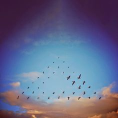 """flying formation"" series by shaun kardinal"