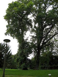 Park Putbus - http://ezechielman.de/wp-content/uploads/2014/03/Putbus_2007_13-700.jpg - %sURL%
