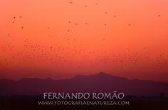 Algures na foz do Huelva, pelos finais dos anos 90, em pleno inverno, assistia ao amanhecer e ao despertar de milhares de aves. Gaivotas, garças, limícolas, passeriformes.... Imagem captada em slid...