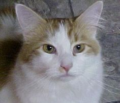 Wanted and Loved Mr. Mister adopted 2008 at 16 months
