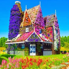 Dubai Miracle Garden, Dubai, United Arab Emirates, Nature, Nature Photography, Flowers, Flower Garden, The World's Biggest Flower Garden, Dream Destinations, Travel, Must see places, Travel Bucket List