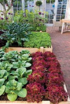 Garden Types Good tips before planting in your raised bed vegetable garden - All About Organic Gardening, Plants, Garden, Urban Garden, Growing Vegetables, Urban Backyard, Outdoor Gardens, Garden Landscaping, Vegetable Garden Raised Beds