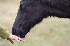 What to do with a biting horse- Parelli Natural Horsemanship
