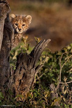 Peek-a-Boo by Roie Galitz on 500px