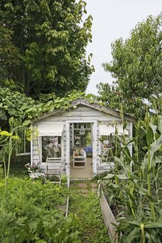 """As a wedding gift one husband transformed a neglected potting shed into a greenhouse """"she shed"""" with a tempered-glass roof."""
