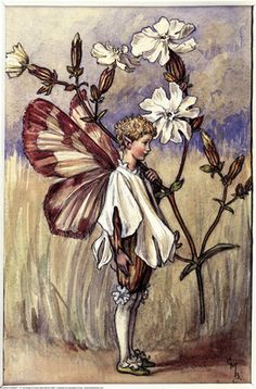 The White Campion Fairy, painted by Cicely Mary Barker for the first edition of her book 'Flower Fairies of the Summer' (1925).  For production reasons, this illustration no longer appears in the book today.  										   																										Author / Illustrator  								Cicely Mary Barker