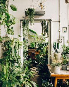 Maximum indoor plants