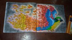 #animorphia #coloringbook #
