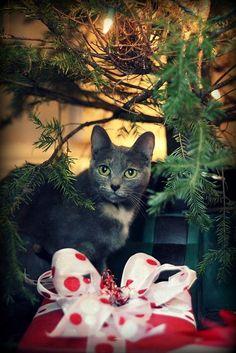 CATS ~ CHRISTMAS