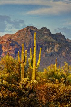 'The Desert Golden Hour' photo by Saija Lehtonen; Superstition Mountains, Arizona